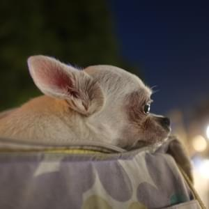 Dog thefts up 250% in the last year: how to keep your pooch safe